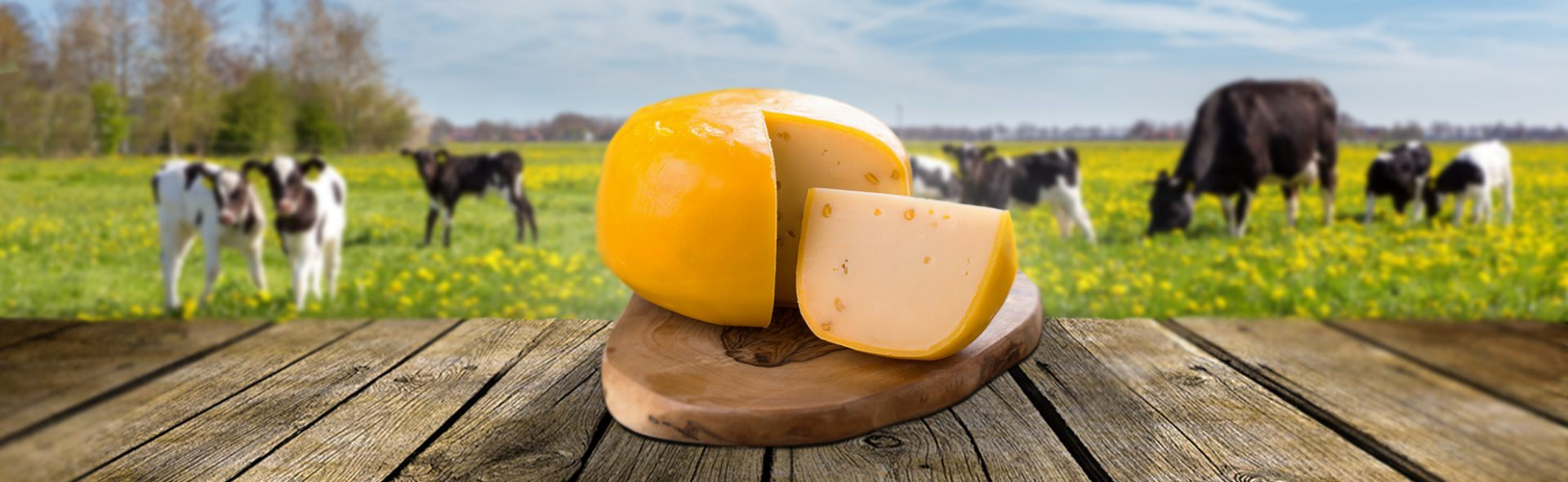 Kaas kopen: de lekkerste kaas bestelt u gemakkelijk online!